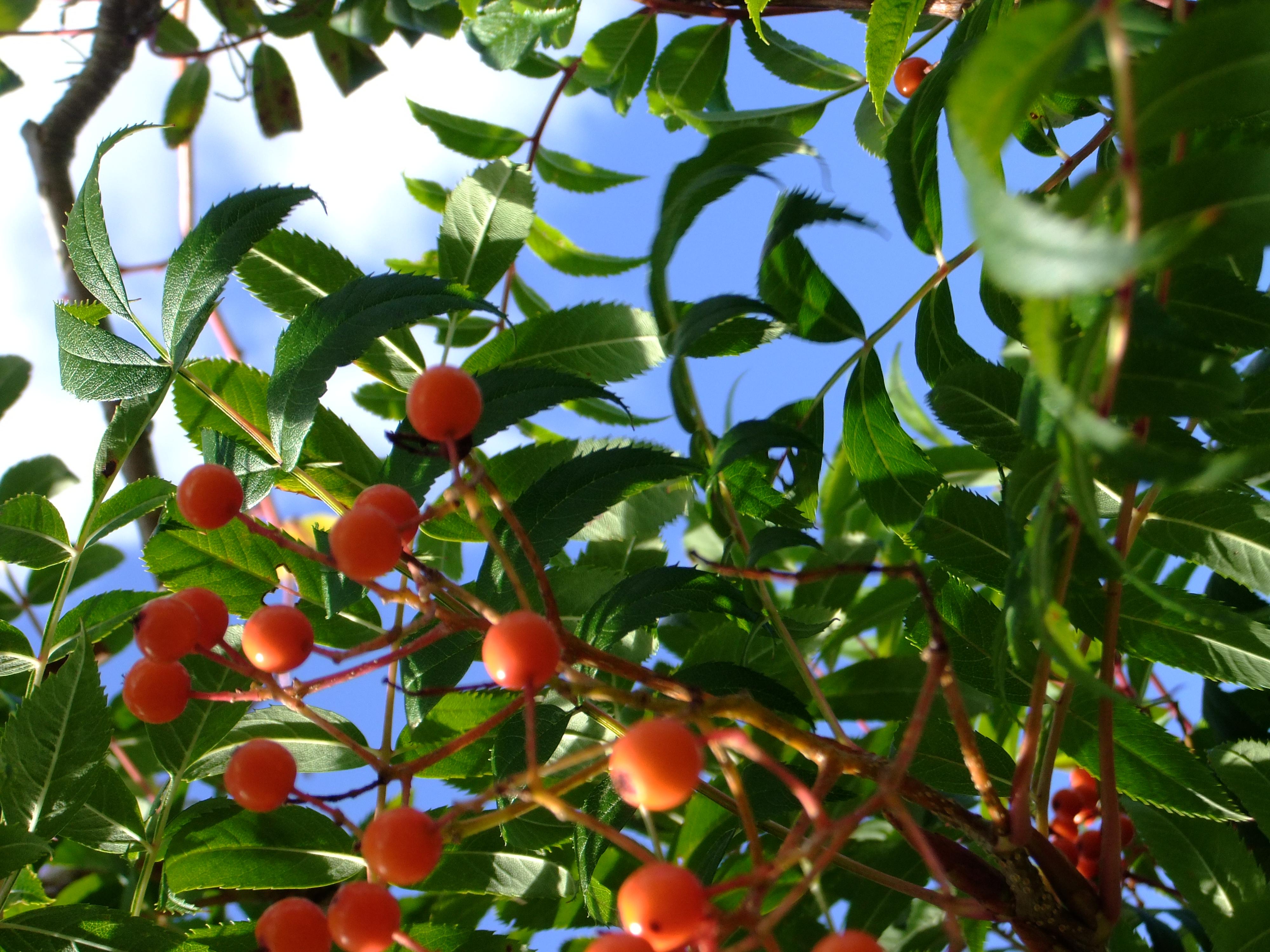 Trees - Hutchings & Son
